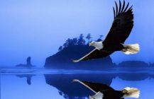Mariposas y Aguilas Imperiales – El mundo de la pareja